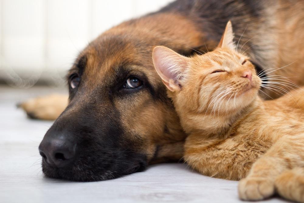 Condominio: si possono vietare gli animali?